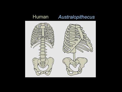 CARTA: Origins of Genus Homo – Carol Ward: Evolution of Early Human Body Form