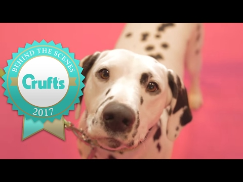 Around the Show on Day 1   Crufts 2017