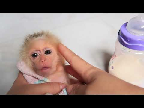 Monkey EMILY