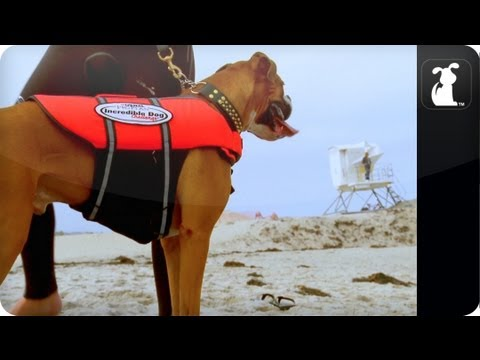 My Incredible Dog - Hanzo The Amazing Surfing Dog