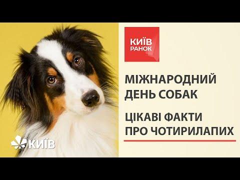 Всесвітній день собак: вагомі причини завести чотирилапого друга