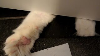 Meet Timo's fluffy paws (while he's playing his favourite game)