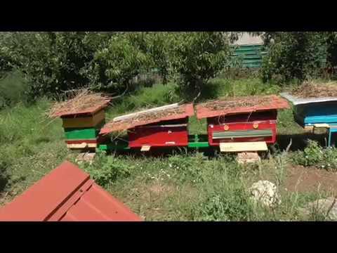 1 год моей пасеке. Прошел год как у меня появилась первая пчела.