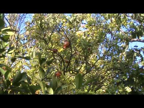 Деревья и кустарники Крыма каталог Крымское досье