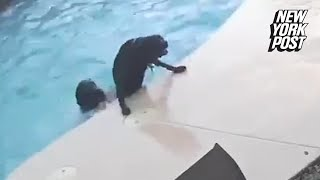 Hero dog jumps into pool to save his best friend | New York Post