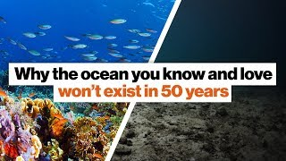 Why the ocean you know and love won't exist in 50 years   David Wallace-Wells