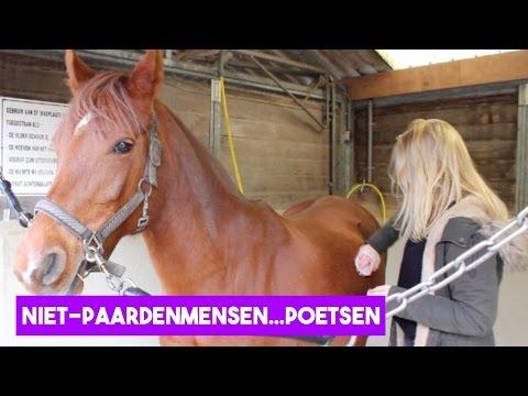 Niet-paardenmensen poetsen een paard! | LeanneAbigail