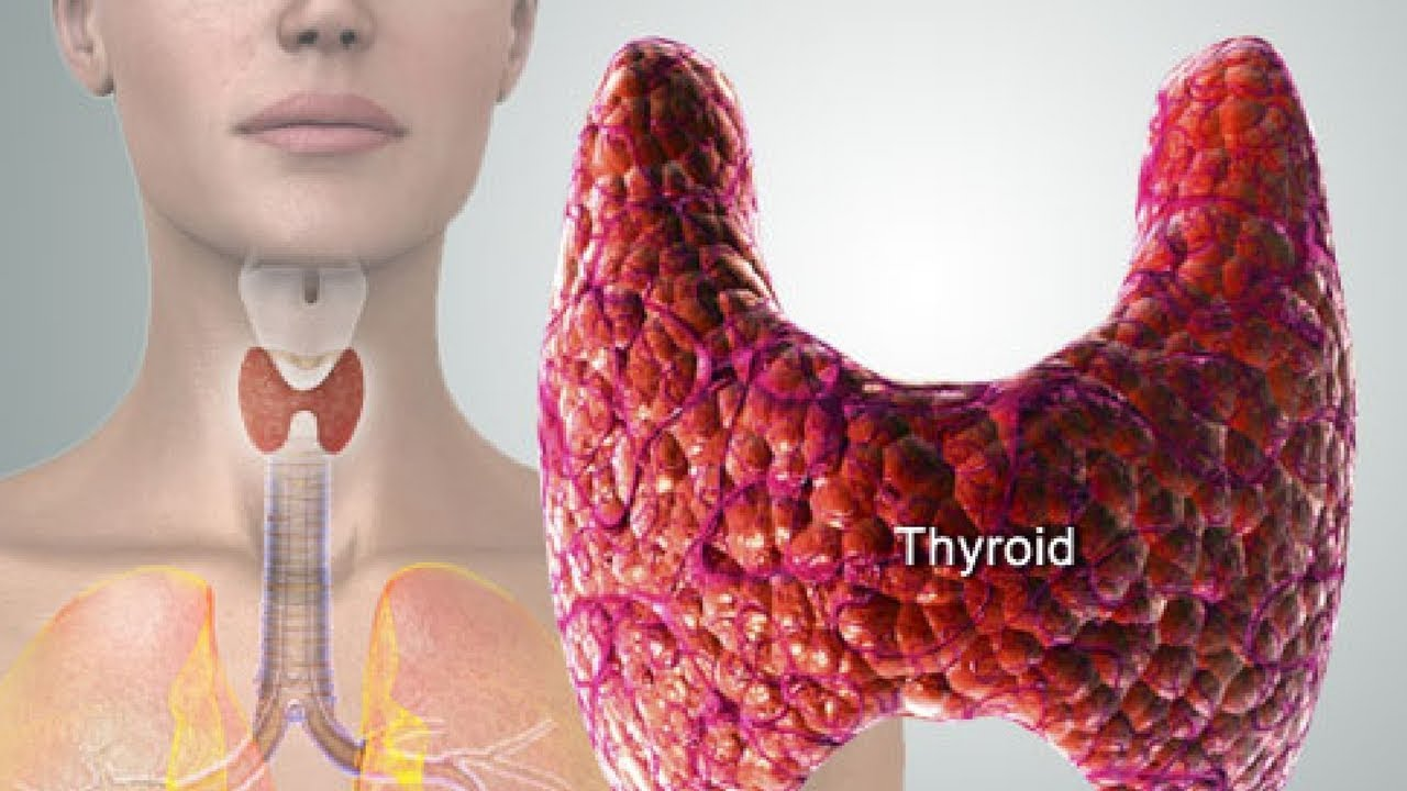 Image result for pexel.com image of healthy thyroid gland