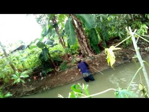 Download Pak omad sang penyelamat binatang