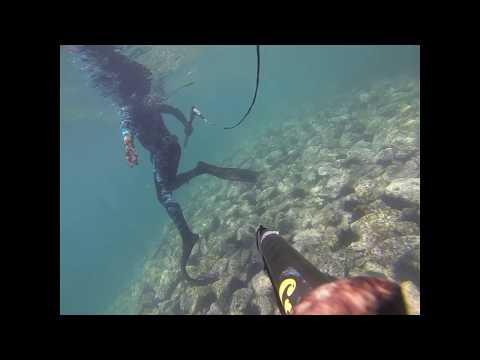 Shoal Bay/Tomaree Headland Spearfishing