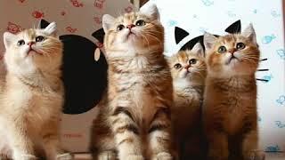 Почему котики любят коробки