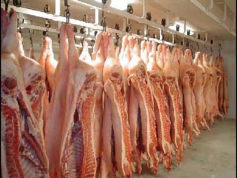 Australian Livestock  Export Industry part 2 - High tech|technology