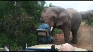Close Encounter with African Elephant! Barrows