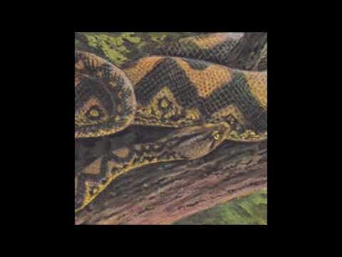 Rainforest Spiritual Enslavement - Beyond the Yellow-Spotted Bamboo (Substance Remix) [HOS-498]