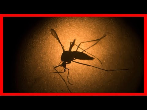 As Zika fades from public consciousness, scientists continue to pursue the virus