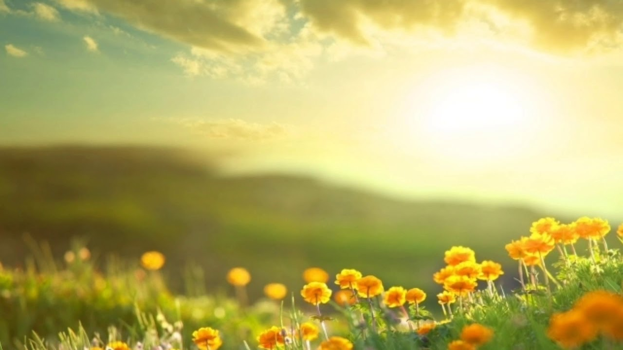 Доброе утро картинка с природой