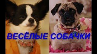 Веселые собачки из Беверли-Хиллз 3