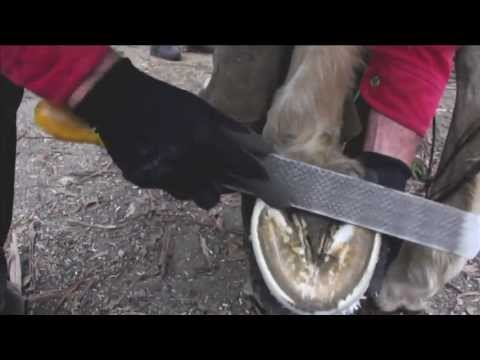 barefoot-maintenance-trim-with-wild-knife--natural-hoof-care