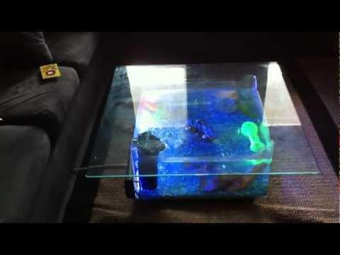 Fish Tank Coffee Table Youtube