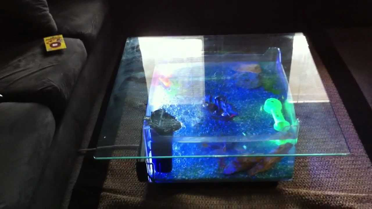 fish tank coffee table - youtube