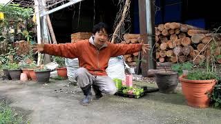 2017年種植巨人南瓜只長出和籃球般大小的南瓜,這回不死心再種一次看看...