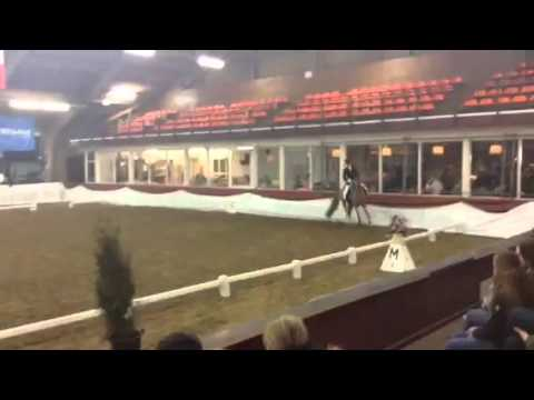 FOR SALE FEI Dressage Pony - Milano - Championships Kür (Freestyle) 2016