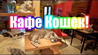 Кафе Кошек в Денвере! Колорадские кошки! Кошачье кафе!