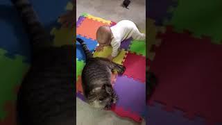 научился тягать Кота за хвост. 6 месяцев