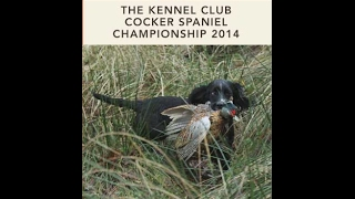 2014 Cocker Spaniel Championship Held At Queensberry Estate, Scotland