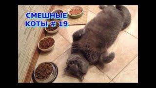 Приколы с кошками и котами #19. Подборка смешных и интересных видео с котиками и кошечками 2017