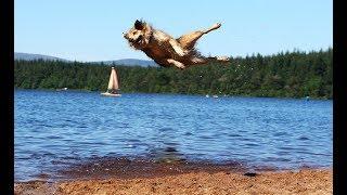 Прикол - Летающая собака