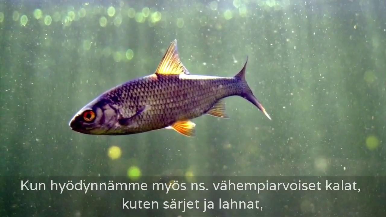 Hoitokalastus
