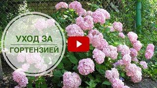 видео Выбираем цветущие декоративные кустарники для дачи: фото гид