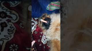 Моя собака курит)))😀