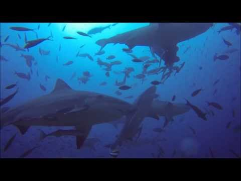 Hand Feeding Sharks