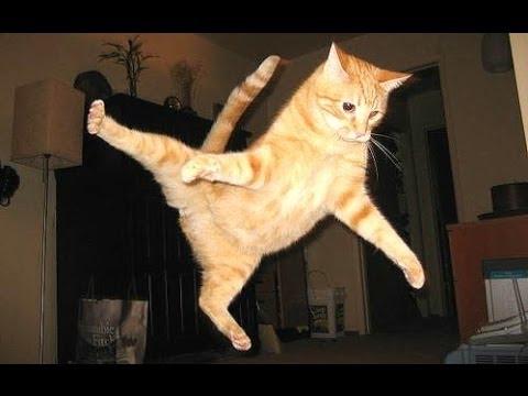 Morsomme Katter - En Morsom Katt Videoer 2016