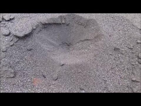 On Safari: Ant Lions Of Death