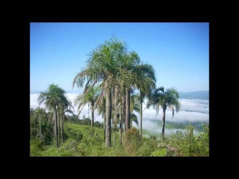 VANILDA DE PAULA-MELHORES MUSICAS