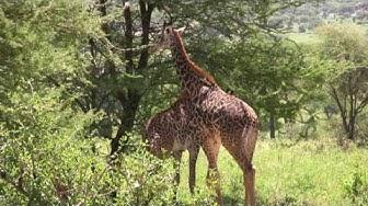 Matkakuvia -  Afrikka: Tarangire ja Lake Manyara