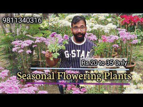 Best Plants For Winter Garden Colour | Flowering Plants Nursery