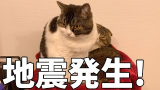 地震発生!パパ猫を守る息子猫