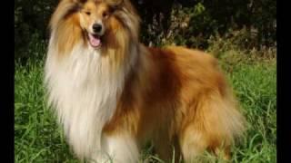 Михаил Веллер критикует новый закон  о измерении собак в холке