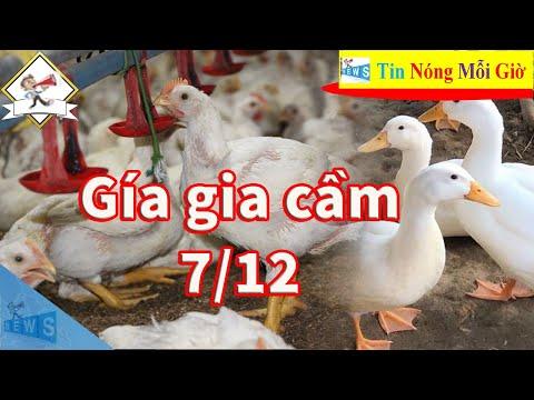 Giá gia cầm hôm nay 7/12 - Cập nhật giá gà Giá vịt thịt mới nhất | Tin Nóng Mỗi Giờ