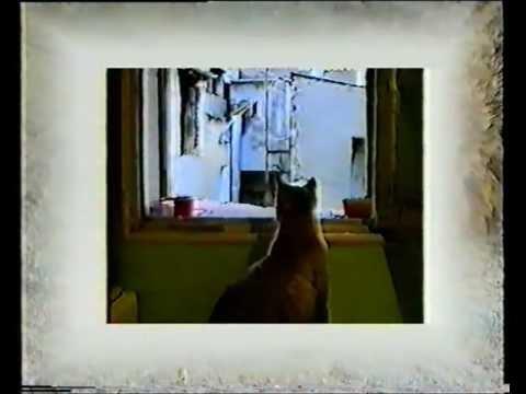 Marquage Urinaire Chez Le Chat
