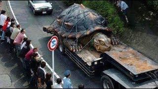 Vạch trần sự thật về rùa khổng lồ 529 tuổi, nặng 363 kg
