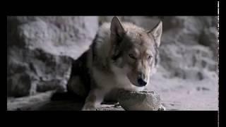 Альфа (Драма, приключения/ США/ 12+/ в кино с 1 марта 2018)