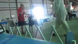Austin Kennel Club Best Of Breed Doberman Pinscher Ring 4-17-11