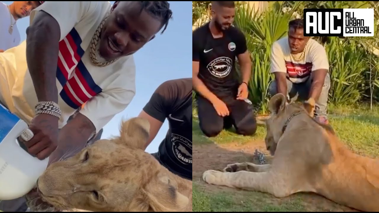 Download DaBaby The Bravest Rapper In The Game Feeds Lion Similac Milk Out His Hand In Dubai