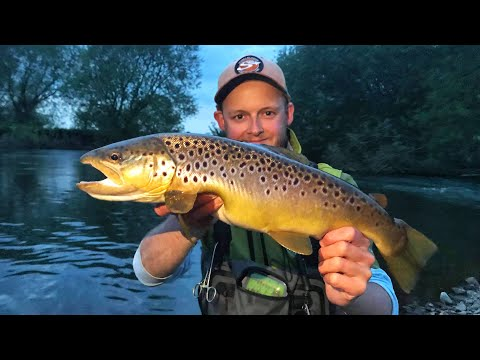 My NEW PB TROUT?! Giant UK River Dove Brown Dry Fly Fishing