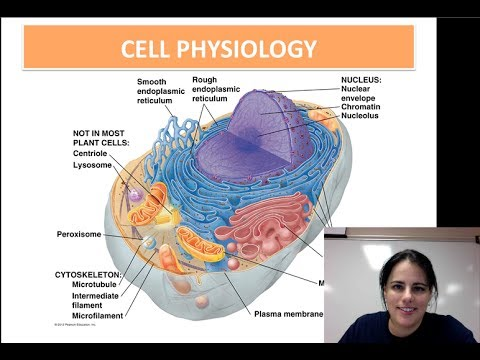 Cell Physiology (Unit 1 - Video 7) - YouTube